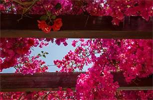 www.flickr.com